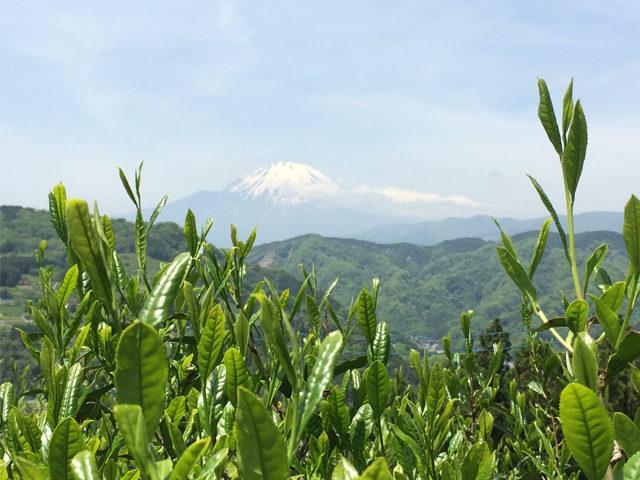 和漢植物ブレンド茶卸小売「いわしや」